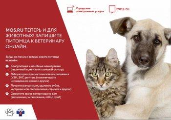 Проведения вакцинации домашних животных против бешенства